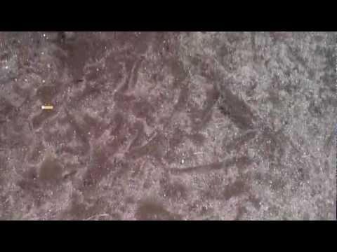 Pati na ang mga worm ay matatagpuan sa pagtanggap pyrantel