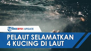 Aksi Heroik Seorang Pelaut Selamatkan 4 Kucing dari Kapal Tenggelam yang Terbakar, Banjir Pujian