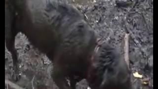 Xenia (Hund) nimmt Schlammbad