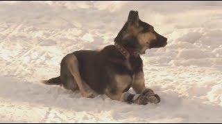 История о собаке по имени Дружок завершилась счастливым концом