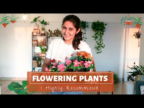 , title : 'Best Flowering Plants for Indoors and Outdoors & their complete care