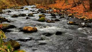 Relaxing River 10 Hours, Peaceful Stream, River Sounds for Sleep, Relaxing, Study, ASMR