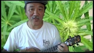 Who Is the Lolo Who Stole My Pakalolo (Don Ho ukulele cover)