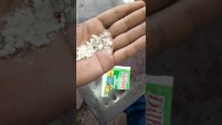 Dilbag Pan masala(3)