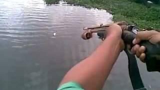 air rifle fishing big fish
