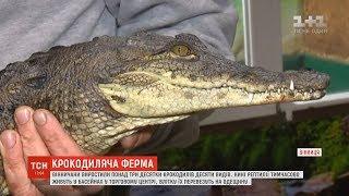 Вінничани розвели понад три десятки крокодилів десяти видів
