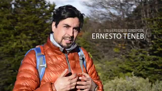 Laboratorio Austral - Ernesto Teneb / Nothofagus