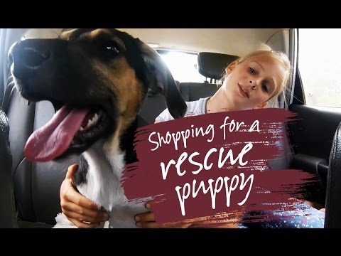 Shopping For A Rescue Puppy