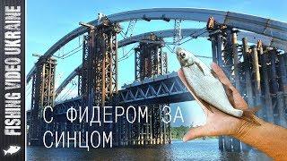 Форум под подольском рыбалка