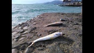 Снасть для ловли ерша в черном море