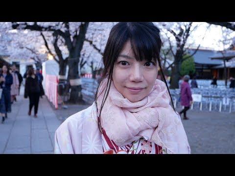 The last greeting in Heisei at Yasukuni Shrine in full bloom of cherry blossoms