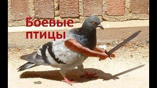 Боевые птицы. ТОП!!! приколы