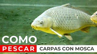 PESCA de CARPAS, pesca con mosca Argentina 🏆 (MIRA EL VÍDEO) 🎣🐟  FLY FISHING, CARP