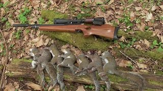 Pest Control with Air Rifles - Squirrel Shooting - Hare Today, Gone Tomorrow