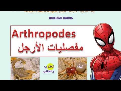 Chisturi de criptosporidiu și giardia