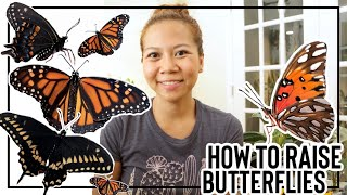How to Raise Butterflies 🦋    A girl with a garden