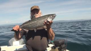 Port Angeles Chinook Salmon July 2017