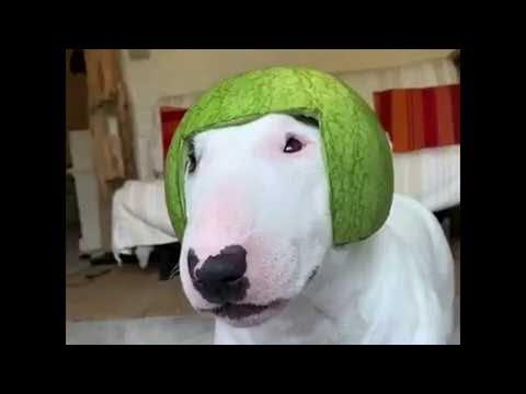 Hund mit Helm