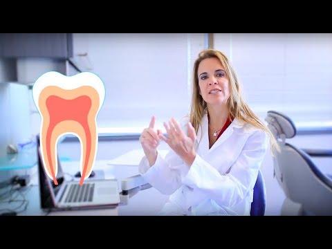 Â¡Conoce tus dientes para tener una mejor salud bucal!