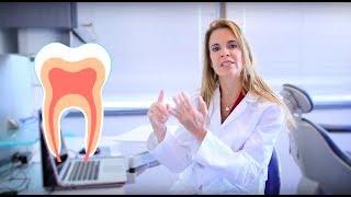 ¡Conoce tus dientes para tener una mejor salud bucal!
