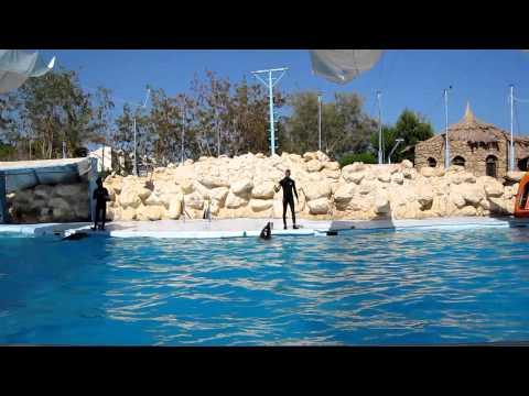 Egipt Delfinarium
