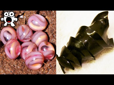 Top 10 Weirdest Animal Eggs You Won't Believe Exist!