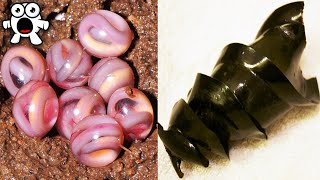 Weird Animal Eggs That Are Extremely Strange