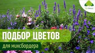 Миксбордер из многолетников. Как выбрать цветы для смешанной посадки в цветочной клумбе