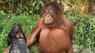 Необычная Дружба Животных - Подними себе настроение!!!