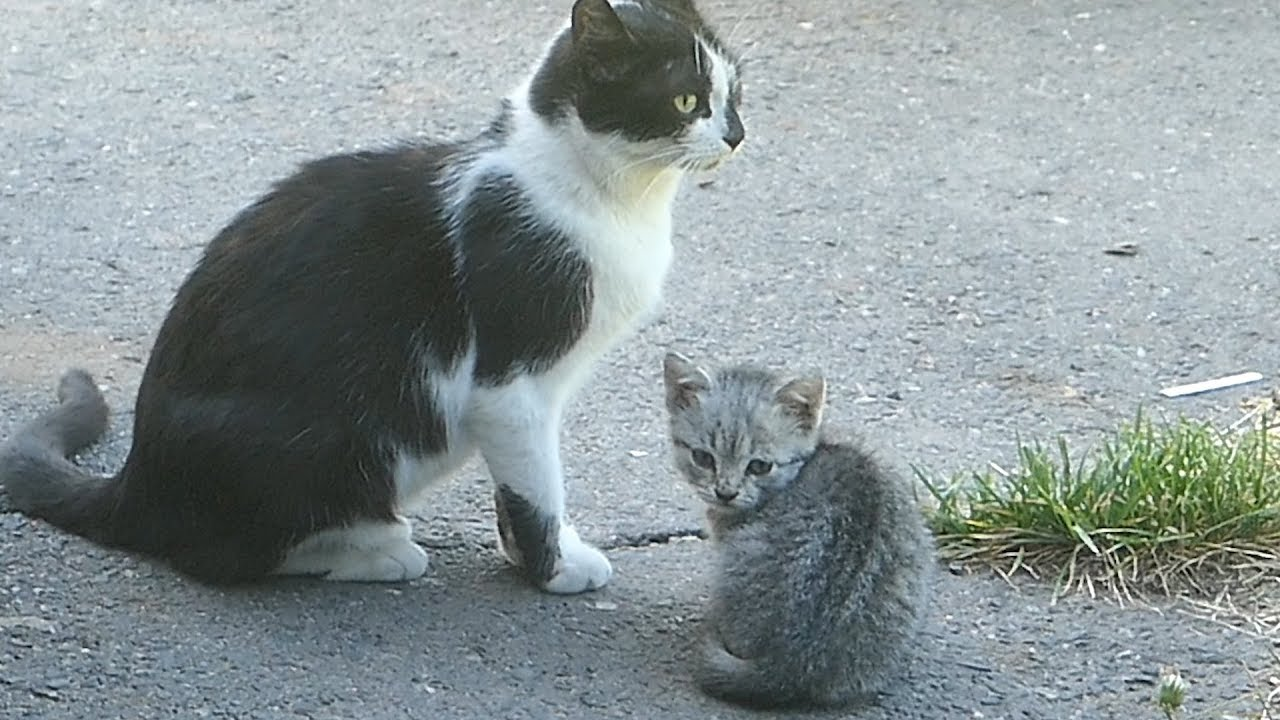 New little kitten with mom and dad