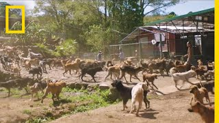 Watch Thousands of Dogs Run Free in This Magical Sanctuary | Short Film Showcase