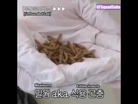 Kung ano ang maaaring maging deduced worm