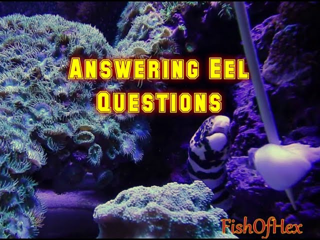 Answering Questions About Eels In A Reef Tank | Subscriber Q@A