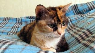 Кошка Макаронка. Игры ленивых и культурных...))). Кошка бейсболист.
