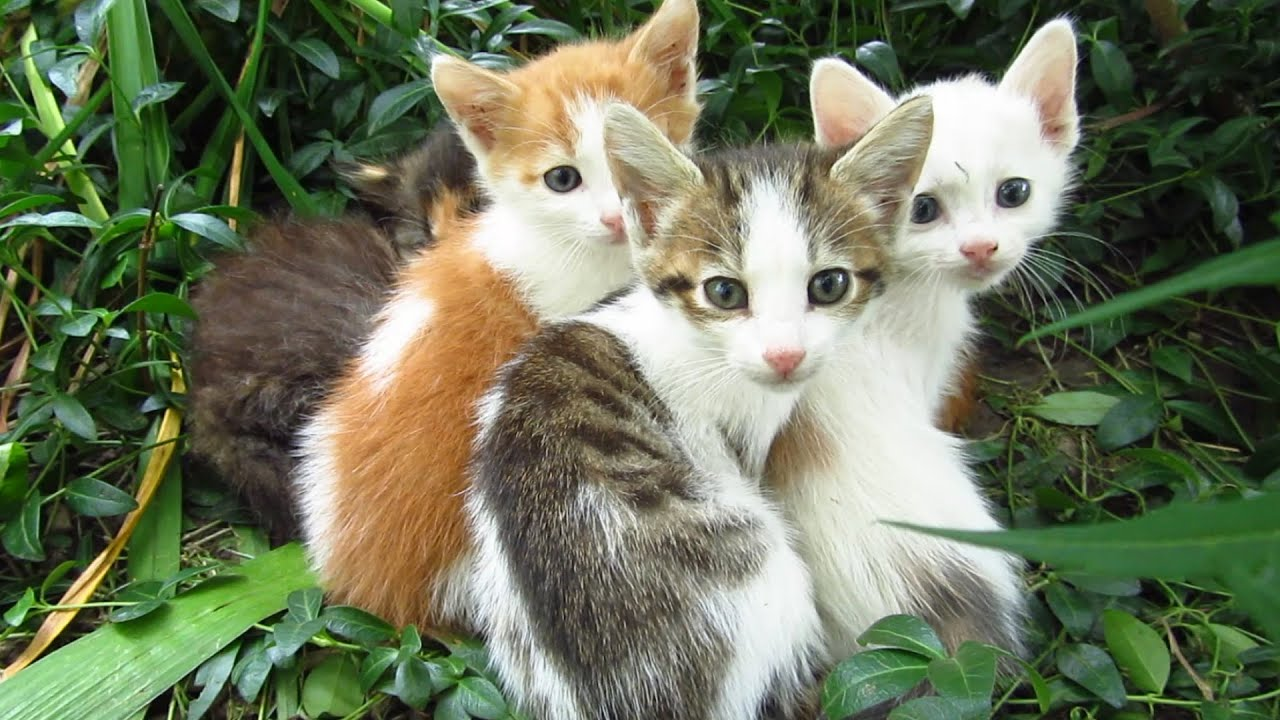 Kittens in the bushes with a new white friend