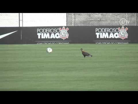 Corinthians ganha reforço inesperado em treino: O gavião
