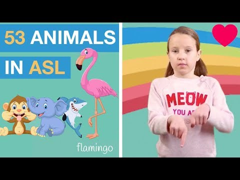 Sign Language Animals - Learn 53 Signs in ASL