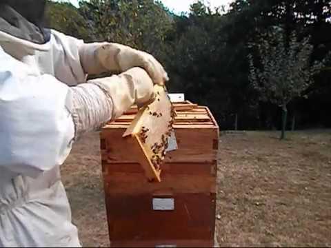 , title : '8 Cosecha de miel 2014