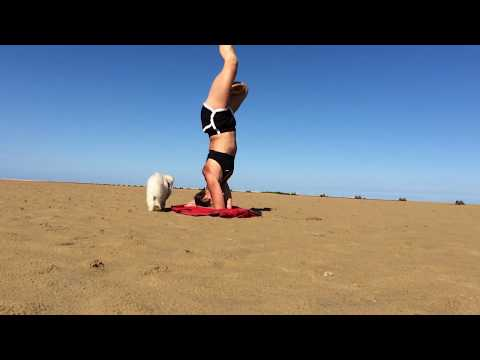 FUNKY DOG YOGA With Mahny And Robbie From Britains Got Talent 2017