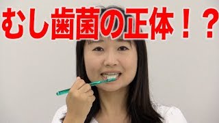 知ってますか?むし歯菌の正体