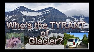 Who are the real TYRANTS of Glacier National Park?