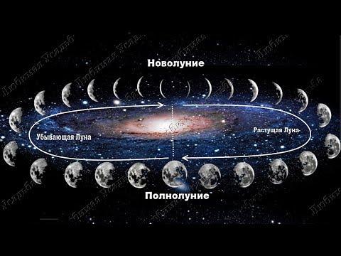 Что и когда  сажать по лунному календарю   Лунный посевной календарь