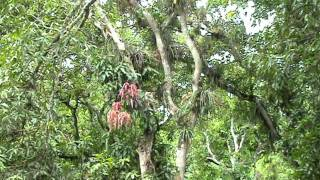 preview picture of video 'Fauna Cubana: Matanzas al natural'