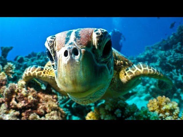 Great Barrier Reef Dive & Snorkel - Port Douglas Australia