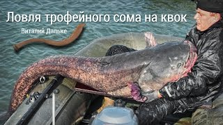 Рыбалка на сома. Ловля трофейного сома на квок