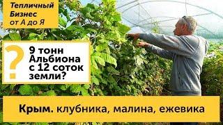 Крым. Клубника, малина и ежевика в Крыму - как выращивают ягоду крымские фермеры