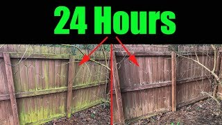 Remove Mold and Algae Fence and House