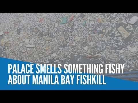 [Inquirer]  Palace smells something fishy about Manila Bay fishkill