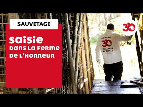 Rencontres québécoises en haïti