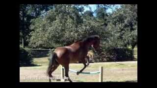 Blind Horse Jumping - Dogwood Lane Horse Sanctuary
